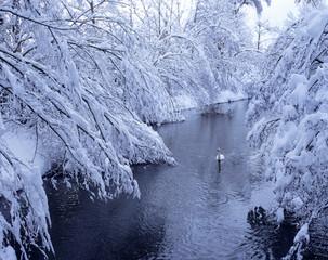 Deutschland, Schöngeising, Bayern, Schwan Fluss Winter