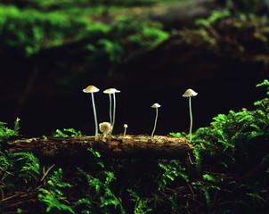 Bayern, Pilze aufBaumstamm