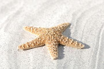 Seefisch auf Sand