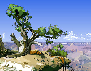 tree on a rocky ledge above the canyon