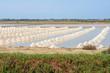 The harvest times of salt in salt evaporation pond