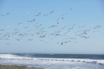 USA, Kalifornien, fliegene Pelikane