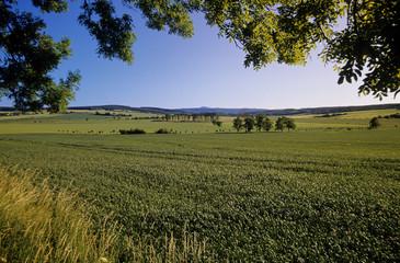 Deutschland, Thüringen, Felder in Marksuhl