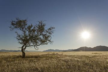 Afrika, Namibia, Steppe und Baum