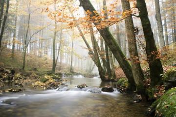 Österreich, Mondsee, Helenental, Salzkammergut, Wald und Bach im Herbst
