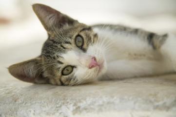 Griechenland, Naxos, Katze auf dem Boden liegen
