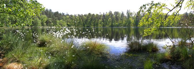 Leśna panorama nad jeziorem