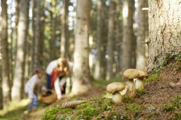 Mutter und Tochter suchen Pilze im Wald