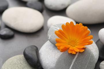 Calendula blühen zwischen Steinen