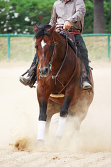 horse in reining competition