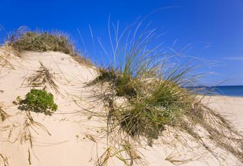 Portugal, Algarve, Sanddüne mit Gras