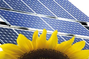 Sonnenblume und Sonnenkollektoren