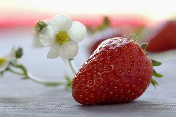 Erdbeere und Blüte