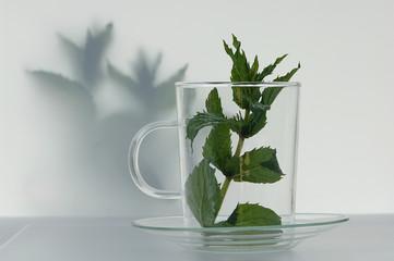 Pfefferminzblätter in einem Glas