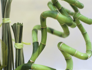 Bambus mit Grasbüschel