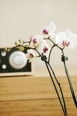 Orchideen mit Temperaturregler