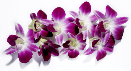 Thailand, Orchidee