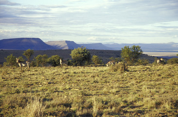 Berg, Zebra National Park, Cradock, Great Karoo, Eastern Cape, Südafrika