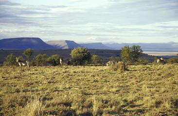 Berg, Zebra National Park, Cradock, Great Karoo, Eastern Cape, Südafrika