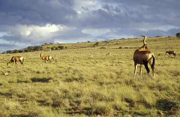 Südafrika, Eastern Cape, Mountain Zebra National Park