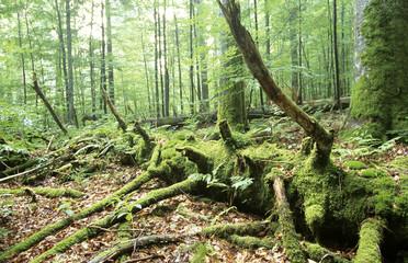 Deutschland, Bayerischer Wald, Nationalpark