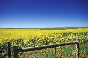 Südafrika, Overberg, Western Cape, Felder in der Nähe von Heidelberg