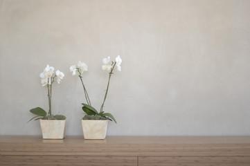 Zwei Topfpflanzen, Orchideen vor der Wand auf dem Regal