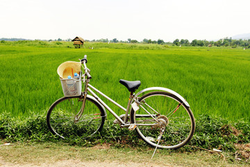 bicycle at rice field