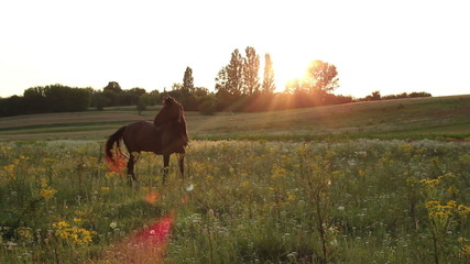 Beautiful horse grazing at summer dusk, sun rays through trees