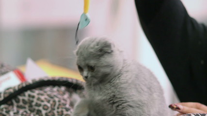 Plush kitten playing