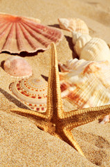 starfish and seashells on the sand of a beach