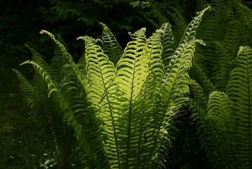 ferns in forest