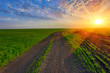 rut road on green field on sunset