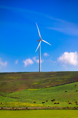 Windmill on green meadow. Spain ecologist