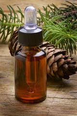Pinus Pine Pin Kiefern Sosna Сосна Çam סאסנע