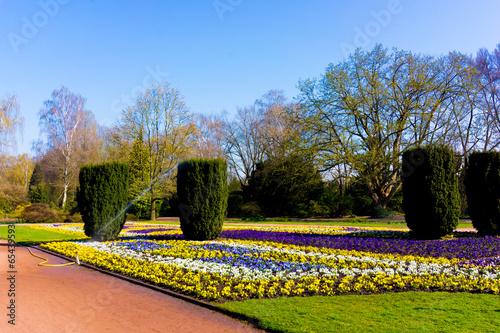 Garden flowers.  garden background - 65439593