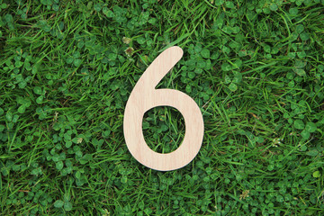 wooden number 6 on grass and clover background