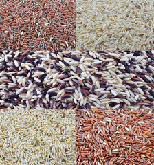 Close-up of rice variety from the world