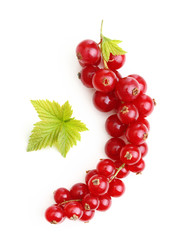 Red currant branch isolated