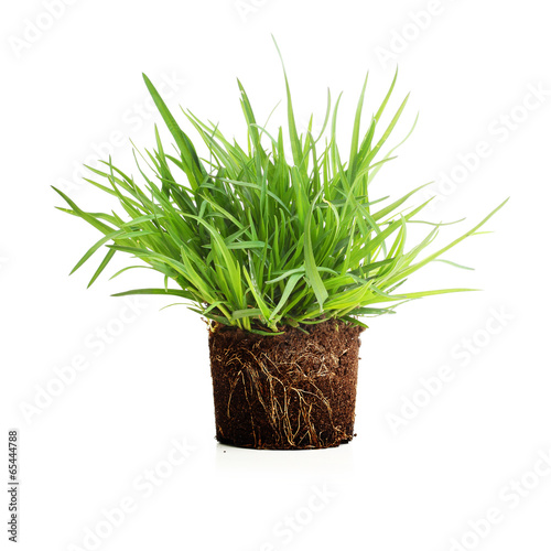 Green grass with roots isolated. - 65444788