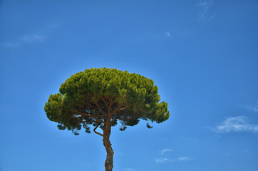 A tree against the sky