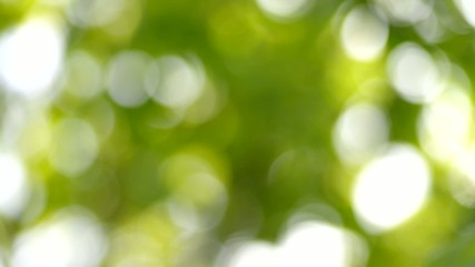Natural green bokeh background.