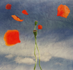 poppies in love with flying petals