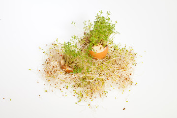Fresh Alfalfa Sprouts and Spring Easter Egg