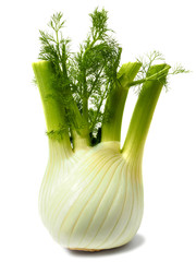Florence fennel bulb on white