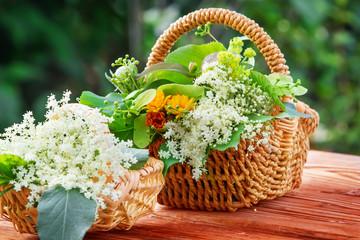 Gesammelte Holunderblüten und andere Heilkräuter