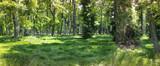 Leśna panorama w środku dziczy