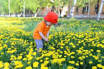 baby in red hat walking against dandelions