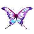 Quadro butterflies design