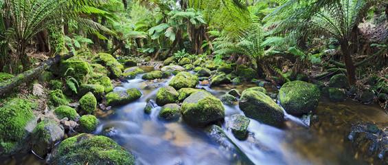 Columba Creek Panorama